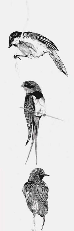 Pen drawings of Small Birds loving the perched swallow xx Drawings Of Birds, Animal Drawings, Pen Drawings, Pet Birds, Small Birds, Mechanical Art, Chef D Oeuvre, Ap Art, Sketch Painting