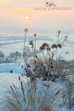 """""""Where the mists and roses live""""  winter"""