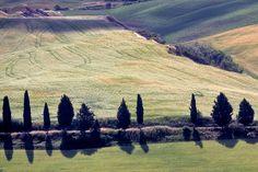 Ciprestes. Região da Toscana, Itália.  Fotografia: efilpera no Flickr.