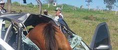 InfoNavWeb                       Informação, Notícias,Videos, Diversão, Games e Tecnologia.  : Casal sai ileso em acidente envolvendo cavalo