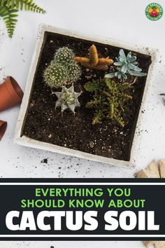 Succulent gardeners know that cactus soil is essential to good plant development. We cover everything you should know about your cactus mix!
