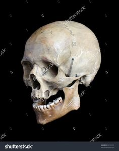 Skull Of The Person. Стоковые фотографии 53191015 : Shutterstock