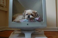 dog  bed from mac monitor...  i'm not much of a little dog fan, but if i ever had one, this would be so cute!