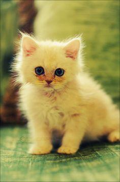 cute_cat_by_SilentPain0.jpg (500×753)