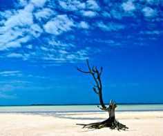The Lone Tree, Harbour Island, The Bahamas