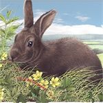 Illustrators, Artists specializing in Animals, Nature, and Wildlife Illustrations