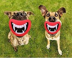 Hosaire 1X Funny Pet Dog Teeth Silicon Toy Puppy Chew Sound Novelty Dogs Play Toys 100% Brand New and High Quality Material: silicone Color:Red/Pink Size Approx: 9.7*7.2*7cm inch(L*W*H) Package included: 1pcs.Features: Help your pet take exercise and de (Barcode EAN = 3405655655686) http://www.comparestoreprices.co.uk/december-2016-4/hosaire-1x-funny-pet-dog-teeth-silicon-toy-puppy-chew-sound-novelty-dogs-play-toys.asp
