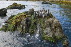 Photograph by Kevin Schafer, Corbis  Chiloé Island, Chile