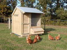 Outpost 1 Bay Hen House with my chickens outside. I can move the hen house around our back paddock to fresh grass every few weeks - great!