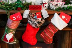 Image of Social Media Stocking Stuffers. This free stock photo is also about: Christmas, Social Media, Funny Christmas, Modern Christmas, and Christmas Treats. Instagram Video Views, Get Instagram, Christmas Cartoons, Christmas Humor, Buy Instagram Followers, Childrens Gifts, Spiritual Gifts, Religious Gifts, Stamping Plates