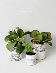 Marble Planters- 25 Great DIY Pots for Your Plants and Flowers