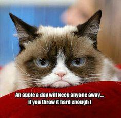 Good ole Grumpy Cat
