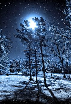 """The winter sky above us was shining in moonlight, and everywhere around us the silence of midnight, and we had gathered snowflakes; remember the soft light of starlight on snow. Winter Szenen, Winter Night, Winter Moon, Winter Blue, Winter Trees, Snow Night, Clear Winter, Snowy Trees, Winter Magic"