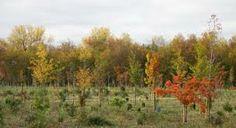 En esta zona podremos observar un completo elenco de especies forestales propias de los bosques templados caducifolios