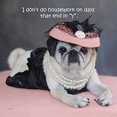 Pugs and Kisses Maddie Katheryn Funny Dog Memes, Funny Dogs, Cute Dogs, Pug Mug, Pugs And Kisses, Pug Love, Dog Boarding, Cute Funny Animals, Baby Animals