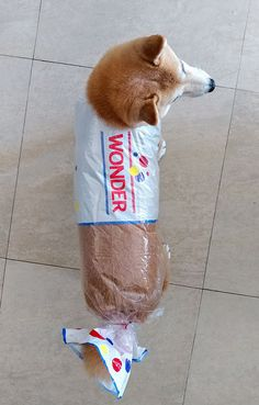 There are pet costumes. And then there are amazingly epic pet costumes. Here is a collection of the greatest pet Halloween costumes to ever grace the web. Funny Animal Memes, Cute Funny Animals, Dog Memes, Funny Animal Pictures, Cute Baby Animals, Funny Cute, Funny Dogs, Cute Dogs, Funny Memes