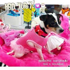 FELIZ CUMPLE PRINCESITA YURY!!  Ella en su Cumple vino a un deli #DogSpa y escogio el Vestidito mas lindo  Como regalo!! Visitanos! Calle 82 # 42 G -06 LOCAL 4 !! 3005135313-3203046 !! Horario LUNES - DOMINGO Y FESTIVOS 8 am - 7 pm en Barranquilla ! envios a toda  #COLOMBIA // we also ship inside #usa  #plaquitasbarranquilla #petstagram #dogdress #dogfashion #petboutique #cachorro  #petstore #perritoscolombia #doglover #doggrooming #doglove #dogshirt #petshop #maicao #cali #medellin #dogspa…