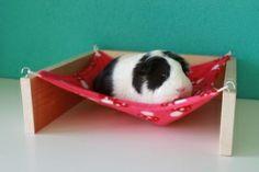 hammock guinea pig - Google zoeken