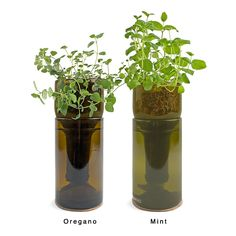 Cultivate your indoor green thumb with a hydrogarden sprouting from a re-purposed wine bottle. Choose between Organic Basil, Organic Chive, or Heirloom Mint.