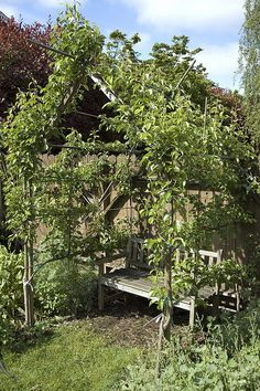 Espalier Pear House.  I want something like this over the back deck, when we have a deck.