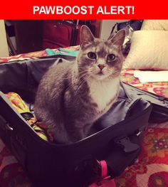 Please spread the word! Finn was last seen in Portland, OR 97216.    Nearest Address: Near SE Salmon St & SE 113th Ave