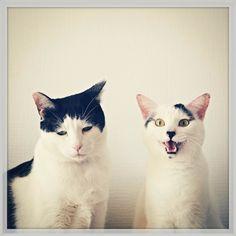 哀愁ただよう僕はネコ。表情がたまらない日々の写真