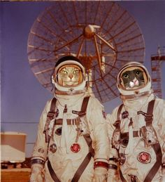 Spotty and Dr. Fluffenstein of the Gemini 10 crew from the Cat Scientists of the 1960s tumblr