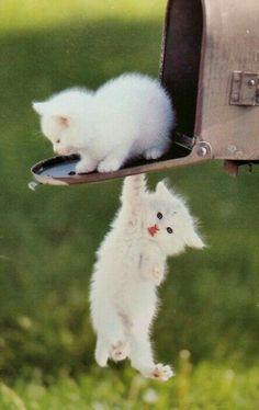Video Cute Cats and Kittens Doing Funny Things - Funny Cat compilation - Funny Cats And Dogs, Cute Cats And Kittens, Kittens Cutest, Pretty Cats, Beautiful Cats, Animals Beautiful, Cute Baby Animals, Animals And Pets, Funny Animals
