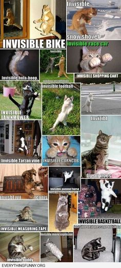 funny invisable cats doing invisible things