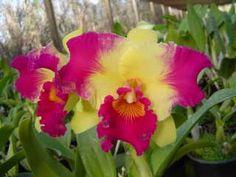 Plantando sua Orquídea - Sem mistério - YouTube