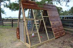 My Stuff: The Guinea Coop