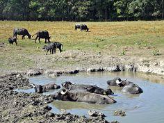 Krokodilok a Balaton-parton Cow, Animals, Animales, Animaux, Cattle, Animal, Animais