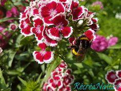 RécréaNature: Fleurs de mon Jardin en Juin et Juillet