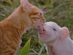 I can't tell if this cat is making friends with this pig or if he wants to eat him.