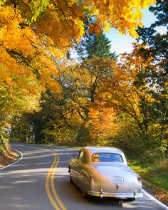 Fall colors in the maple trees makes for pleasant drive on country road with an old classic car. like this picture a lot... (trees, plaid, classic cars & bears is that too many things to incorporate for a baby boy room theme? lol)