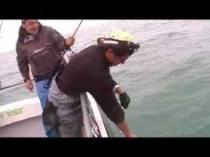 congre 38 kg.mp4 Fishing Techniques, Sea Fishing, Fishing Equipment, Baseball Cards, January 26, Fishing Tackle