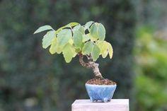 思い出など |超ミニ盆栽のブログ