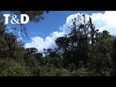 La Amistad International Park Tourism Guide - Travel & Discover