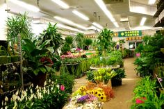 Indoor Garden Center The boma garden centre kentish town indoor plant greenhouse love we are family owned with over 20 years experience featuring fresh premium cut flowers workwithnaturefo