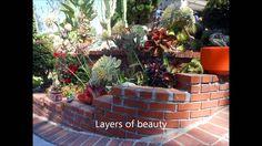 Frank's Magical Succulent Garden