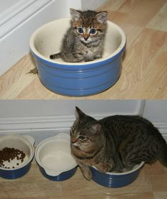 Cats seem to have this special emotional power. You see it here in photos recreating a moment from each's kittenhood.