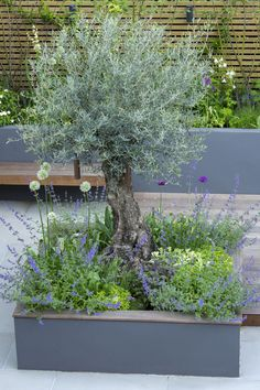 Garden trees, Yard landscaping, Mediterranean garden, Front yard landscaping, Fr… - All For Garden