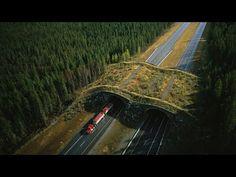 PBS NOVA Wild Ways(HD) Pbs Nova, Save Wildlife, Habitats, Survival, Country Roads, World, Youtube, Animals, News