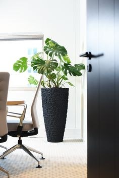 Lean Office, Philodendron Monstera, Container Plants, Outdoor Living, Modern Design, Chair, Furniture, Gardens, Home Decor