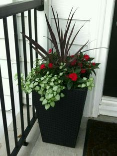 One way to beautify the entrance of your home is to place some flower pots close to the door. Here are several front door flower pots to inspire Container Flowers, Flower Planters, Container Plants, Container Gardening, Flower Pots, Outdoor Flowers, Outdoor Planters, Garden Planters, Tall Planters