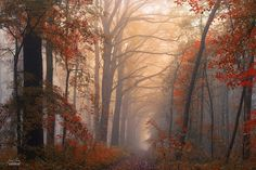 This Photographer Takes Stunning Dream-Like Photos Of Autumn Forests.