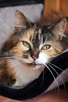 pretty cat .