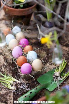 Trädgårdsflow: Colorful eggs