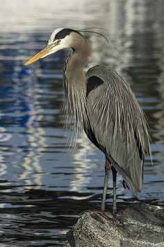 Heron at the Harbor https://www.facebook.com/bruce.frye.photography/