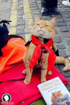 The London cat tert Bob the Cat! _ _ The first leg, the British network UKER.net-UK visa application to live in Britain